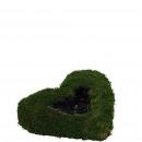 Plant heart moss, D40cm, green-nature